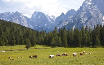 CORTINA D'AMPEZZO, ITALY - JULY 04: Landscape around Lake of Misurina with the Tre Cime di Lavaredo rock formation,  cows on July 04, 2011 in Cortina D'Ampezzo, Dolomites, Italy.The area belongs to the UNESCO World Heritage sites. Cortina is famous for skiing in winter and hiking, climbing, mountainbiking in summer.  (Photo by EyesWideOpen/Getty Images)