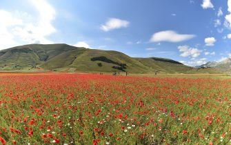PERUGIA, ITALY - JULY 10:  The shape of Italy is made with trees on the hill during Annual Blossom in Castelluccio on July 10, 2018 in Castelluccio di Norcia near Perugia, Italy.  (Photo by Giuseppe Bellini/Getty Images)