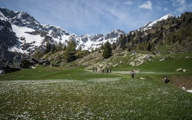 10.05.2014 Otro, Val Sesia (IT). Traditional 'transumanza'. Every begging of summer the  shepherds move all their animals to an higher stall to provide them with fresher grass