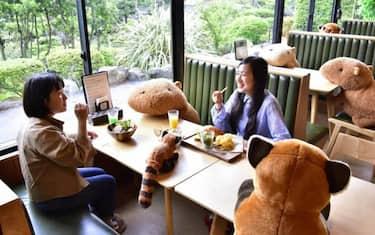 Izu Shaboten zoo 3_Giappone