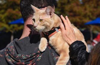 SAN ANTONIO, TEXAS - DECEMBER 9, 2018:  A woman pets a cat riding on his owner's shoulder in a park in San Antonio, Texas. (Photo by Robert Alexander/Getty Images)