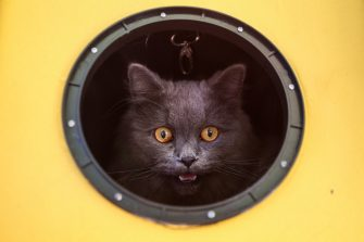 TOPSHOT - A cat meows while looking out from its carrier as animals and their owners gather at Our Ladies of Remedies Parish in the Malate area of Manila on October 6, 2019, for an annual pet blessing ceremony. - The event was in part of celebrations to mark the Feast of St. Francis of Assisi, the patron saint for ecologists, honouring his boundless love for animals and nature. (Photo by JAM STA ROSA / AFP) (Photo by JAM STA ROSA/AFP via Getty Images)