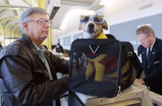 """399830 01: F. Andy Messing Jr. Checks In At An Airline Counter With His Pet """"Dick The Dog"""" For A Flight To St. Petersburg, Florida January 18, 2002 At Washington Dc's Reagan National Airport. A New Law Went Into Effect January 18 Requiring Airlines To Check For Explosives, Either By Machine, Hand Or Bomb-Sniffing Dog Or By Matching Each Piece Of Luggage To A Passenger On Board.  (Photo By Manny Ceneta/Getty Images)"""