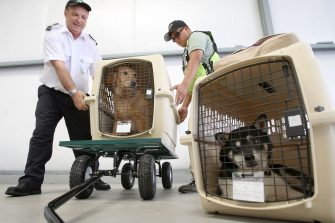 HAWTHORNE, CA - JULY 16:  Pets are loaded for take-off for the southern California maiden departure of Pet Airways on July 16, 2009 in the Los Angeles-area city of Hawthorne, California. The new pets-only airline will make stops in Denver, Chicago, Washington DC, and New York. Pet Airways, based in Delray Beach, Florida, is operating a 19-passenger Beech 1900 aircraft in partnership with Suburban Air Freight with the seats removed to carry up to 50 pets in animal crates per flight. Despite economic hard times for most US businesses, the airline expects to begin service to Boston later this year and expand into 25 cities within two years.  (Photo by David McNew/Getty Images.