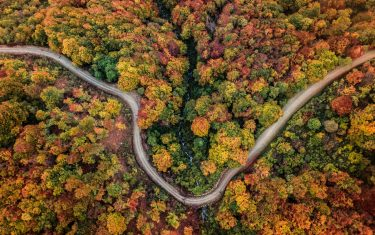 rsz_copertina_foliage