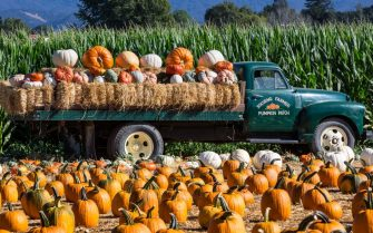 SOLVANG, CA - SEPTEMBER 29:  Pumpkins are displayed at the Solvang Pumpkin Patch on September 29, 2018, in Solvang, California. Because of its close proximity to Southern California and Los Angeles population centers, the coastal communities of Santa Barbara County have become a popular weekend getaway destination for millions of tourists each year. (Photo by George Rose/Getty Images)