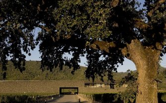 YOUNTVILLE, CA - 2009:  The unique stone architecture and design of Dominus Winery is seen in this 2009 Yountville, Napa Valley, California, morning summer photo.  (Photo by George Rose/Getty Images)