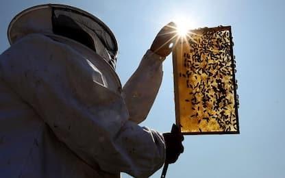 Milioni di api uccise in raid vandalico contro apicoltore nel Canavese