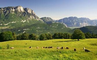 Summer Mountain Monte Bondone at Malga Brigolina pasture alpine pasture overlooking paganella. (Photo by: Marco Simonini/REDA&CO/Universal Images Group via Getty Images)