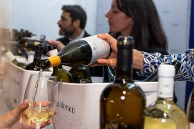 I 5 vini più goduriosi del Lazio. Secondo Vinoforum