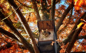 The Comedy Pet Photography Awards 2021 Thomas Marlie 48153 Münster Germany Title: House Squatter! Description: Our cat Simba occupying the owl box Animal: Simba Location of shot: Im Mammutbaum in unserem Garten in Münster