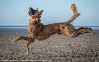 The Comedy Pet Photography Awards 2021 Christine Johnson Warrington United Kingdom Title: Boing Description: I was busy playing with my dog on the beach and this dog came to play. I liked the shapes he was making in the air. Animal: Dog Location of shot: Crosby Beach
