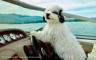 The Comedy Pet Photography Awards 2021 Donna Deshon SANDPOINT United States Title: Licensed to drive! Description: This is Lucy! While boating on our local lake in Idaho Lucy decided to take the wheel and she did great! Animal: Dog Location of shot: Sandpoint, Idaho