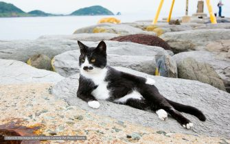 The Comedy Pet Photography Awards 2021 Kenichi Morinaga Fukuoka Japan Title: Cat model. Description: He is an model of cat.So I just focus my DSLR for cat, He is just make a pose like that and then shoot. Animal: cat Location of shot: Fukuoka Japan