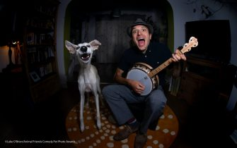"""The Comedy Pet Photography Awards 2021 Luke O'Brien Coventry United Kingdom Title: Muttford and Chum Description: Losing the opportunity to play with my human band mates during lockdown, Flint my rescue dog soon taught me that we didn't just have sharp bones in common, but musical ones too. He soon became the perfect substitute for a collaborative stomp up at home, so much so that we felt we deserved our own band name (Muttford and Chum). With my camera set up remotely during this shoot, I think it's fair to say that the image is proof that his conviction as a performer matches my own - well, we were covering """"treats and tugs and dinner bowls"""" by Ian Puli and the Boneheads. Animal: Flint the dog Location of shot: at home"""