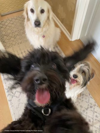 The Comedy Pet Photography Awards 2021 Mollie Cheary Poole United Kingdom Title: Photo bomb Description: Bailey was so excited to see her friends, she couldn't sit still for a photo! Animal: Bailey Location of shot: Dorset