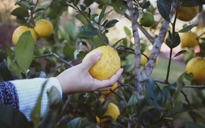 Alberi da frutto, quando e come piantarli