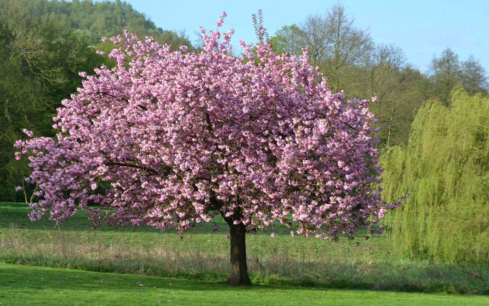 Alberi sempreverdi, le migliori 4 varietà da piantare nel tuo giardino