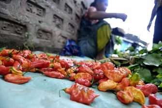 A tribal vendor displays 'Bhut Jolokia', claimed to be the world�s hottest chilli, at a local market in Guwahati, the capital city of the northeastern state of Assam on July 1, 2009. Indian soldiers will hurl hand grenades containing red chilli powder to dispel rioters instead of the potentially lethal explosives currently used, an official has said.   Scientists of the research wing in the defence ministry say the grenade will be made using a chilli known as Bhut Jolokia, grown in the northeastern state of Nagaland.  Pepper spray and tear gas are commonly used as crowd deterrents in India.  AFP PHOTO/ Biju BORO (Photo credit should read BIJU BORO/AFP via Getty Images)