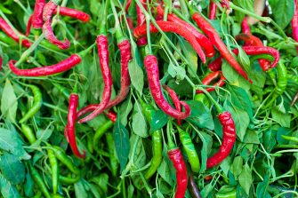 ITALY - SEPTEMBER 21:  Red and green chili peppers, Capsicum pubescens, on sale in food market in Pienza, Tuscany, Italy  (Photo by Tim Graham/Getty Images)