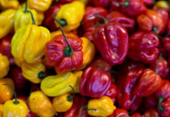 Red and yellow Habanero peppers are for sale at a market in Berlin on December 12, 2013.  AFP PHOTO / DAVID GANNON (Photo by David GANNON / AFP) (Photo by DAVID GANNON/AFP via Getty Images)