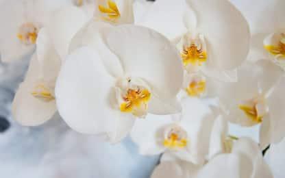 Orchidee, come concimarle e prendersene cura