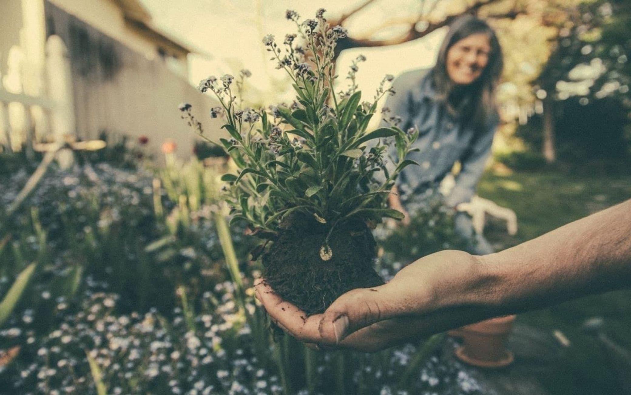 Concimi naturali, 5 fertilizzanti fai da te per orto e giardino