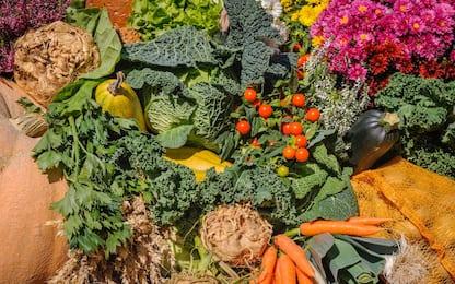 Giardinaggio, cosa piantare nell'orto e in giardino a maggio. FOTO