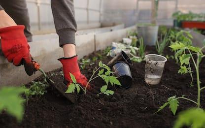 Cura delle piante da giardino nel mese di settembre: i consigli