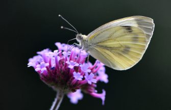 A butterfly sits on a flower at the botanical garden on July 19, 2019 in Bochum, western Germany. (Photo by INA FASSBENDER / AFP)        (Photo credit should read INA FASSBENDER/AFP via Getty Images)