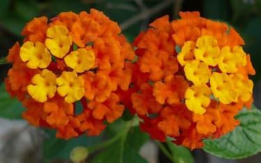 fioriture-ottobre_pixabay