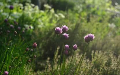 Come creare un piccolo angolo di piante aromatiche per orto o balcone