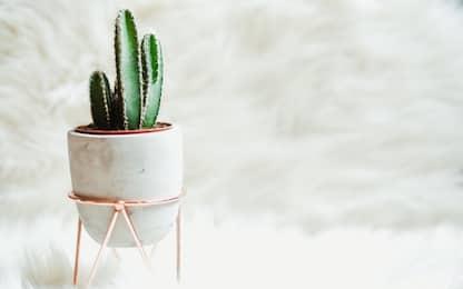 Le 5 migliori piante finte da interno per arredare la tua casa