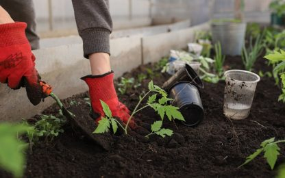 Cosa piantare nell'orto nel mese di ottobre