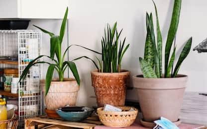5 piante verdi da interno che richiedono poca luce e facili da curare