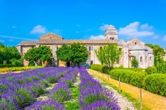 In foto campi di lavanda a Saint-Rémy-de-Provence