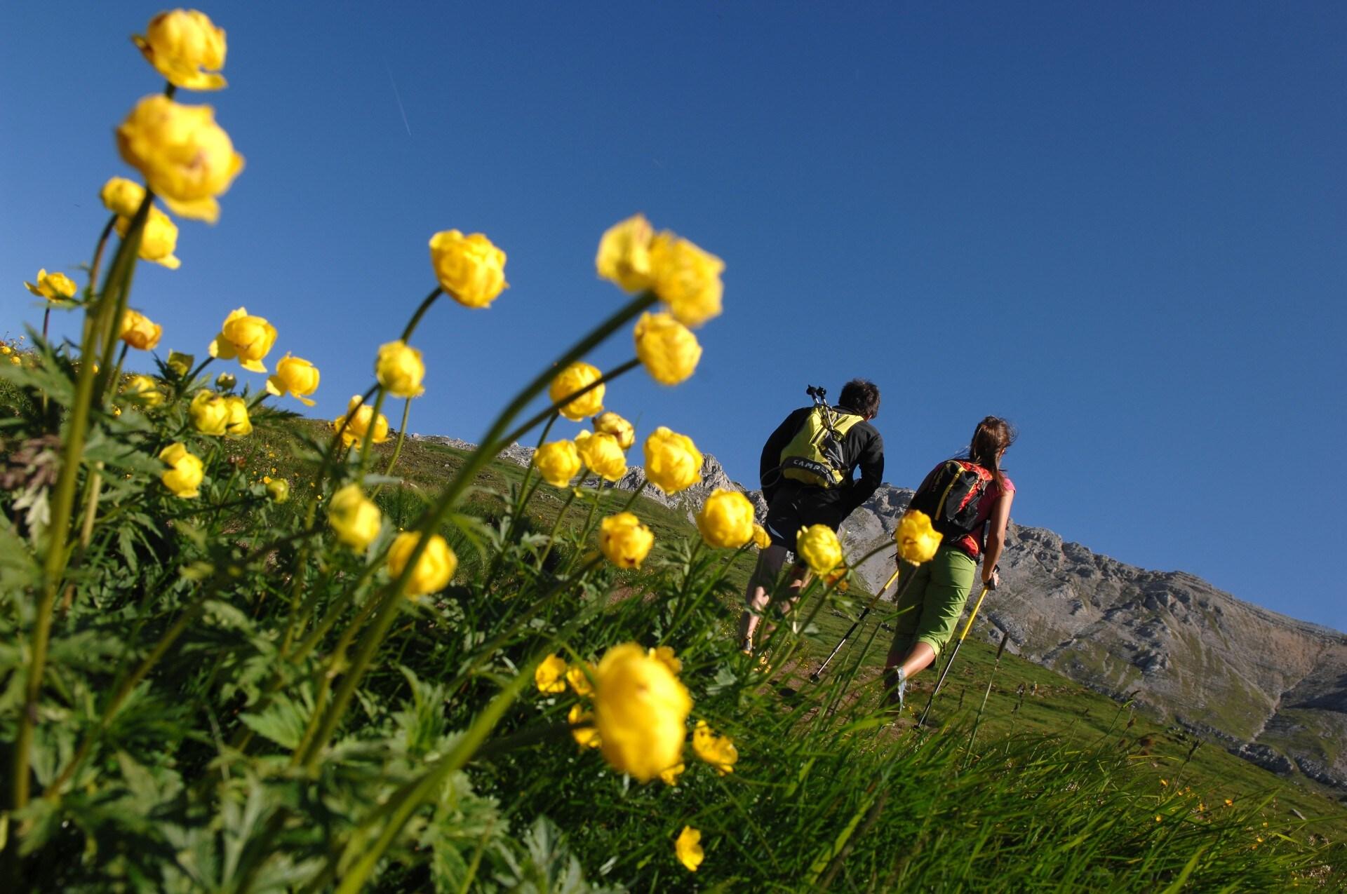 In Val di Fiemme sono numerosi i percorsi che gli amanti del trekking possono scegliere