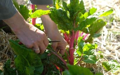 Quali sono le verdure di stagione da coltivare in casa in autunno