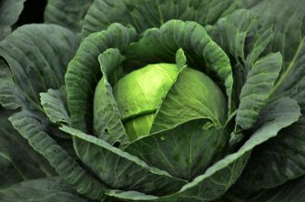 View of a cabbage at a plantation in La Tigra National Park, Francisco Morazan department, 15 km northeast of Tegucigalpa, Honduras, on September 5, 2020. - La Tigra, with an extension of 24,040 hectares, is part of the central mountain range of Honduras. (Photo by ORLANDO SIERRA / AFP) (Photo by ORLANDO SIERRA/AFP via Getty Images)
