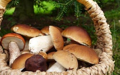 Funghi porcini, come pulirli e cucinarli: 3 idee