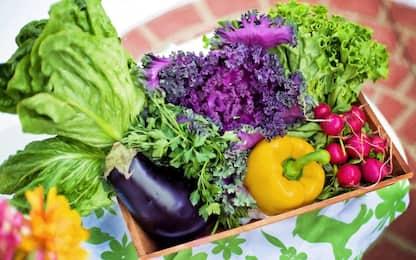 Dieta vegetariana, quali cibi consumare: esempio di menù equilibrato