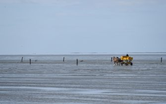 CUXHAVEN, GERMANY - MAY 06: Horse and carriage that take holiday makers to the island of Neuwerk at low tide is seen ready for vacationers at Duhne beach during the coronavirus crisis on May 6, 2020 near Cuxhaven, Germany. German states that contain popular holiday destinations and that are economically dependant on tourism, including Lower Saxony, Mecklenburg-Western Pomerania, Schleswig-Holstein and Bavaria, have announced an easing of lockdown measures in order to let hotels, restaurants and beaches reopen for visitors in coming weeks. (Photo by Stuart Franklin/Getty Images)