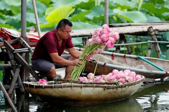 epa08446321 A man collects lotus flowers at a lake in Hanoi, Vietnam, 27 May 2020. Traditions sees for Vietnamese people use the inner parts of the lotus to mix with tea in oder to get a unique fragrance. Lotus flower season is usually from late May through to August.  EPA/LUONG THAI LINH