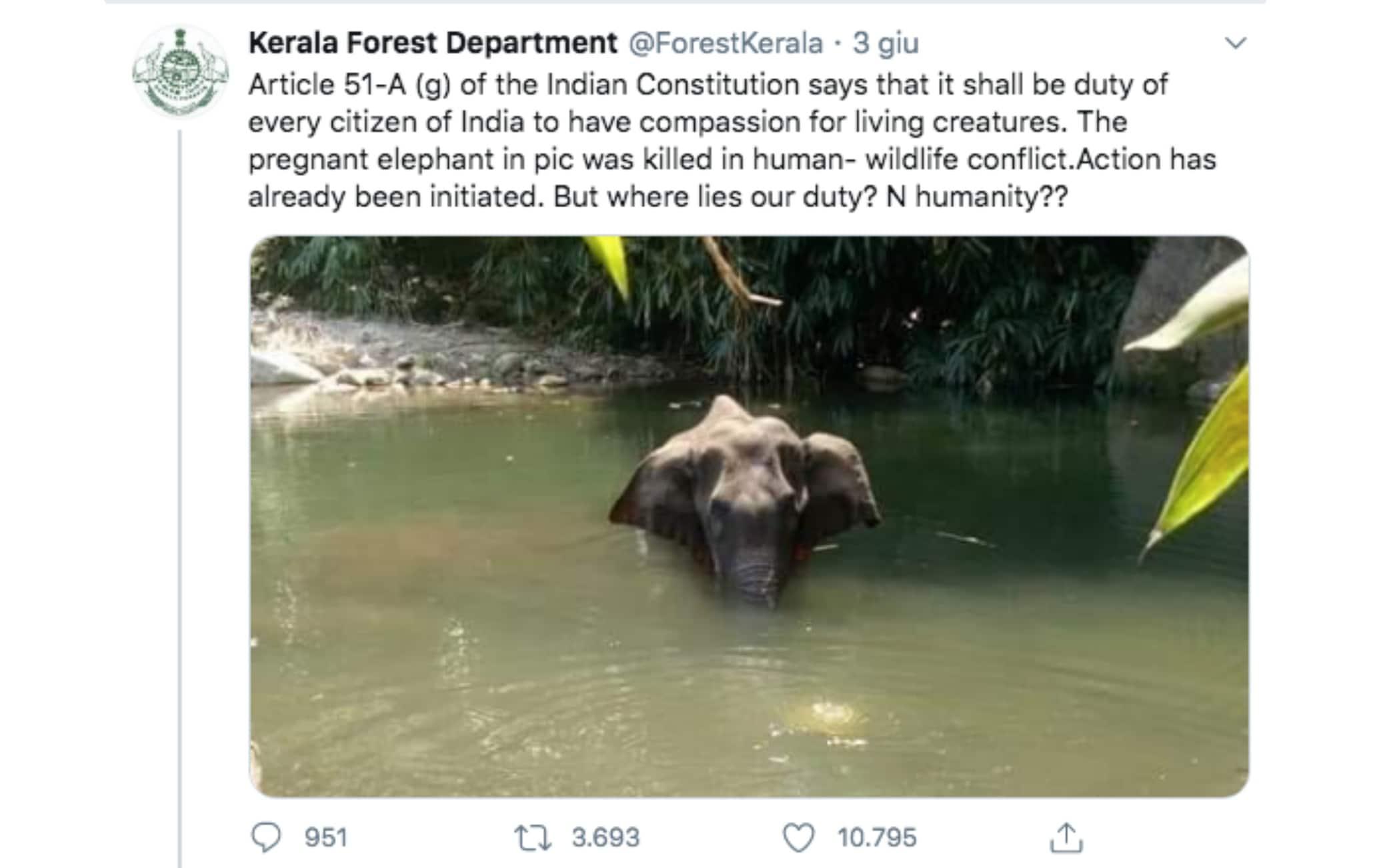 elefante india petardi