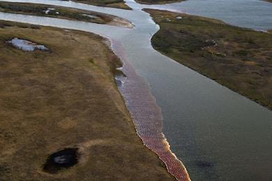 Russia, disastro ambientale Siberia: allarme scioglimento ghiacci FOTO