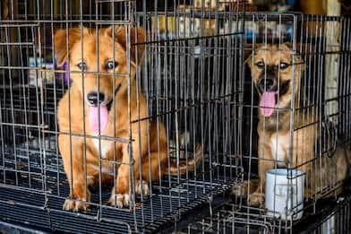 Cina, Covid non ferma il Festival Yulin e la vendita di carne di cane