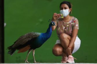 epa08501302 A woman wearing a mask takes a photo of a peacock at the Cali Zoo, Colombia, 21 June 2020. On 21 June and after being closed for more than three months, the Cali Zoo is the first in Latin America to open its doors to the public again in the midst of the COVID-19 pandemic and under the strictest biosecurity measures.  EPA/Pablo Rodriguez