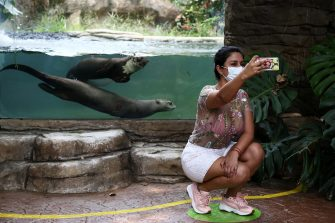 epa08501301 A woman wearing a mask takes a photo with the giant otter pond at the Cali Zoo, Colombia, 21 June 2020. On 21 June and after being closed for more than three months, the Cali Zoo is the first in Latin America to open its doors to the public again in the midst of the COVID-19 pandemic and under the strictest biosecurity measures.  EPA/Pablo Rodriguez