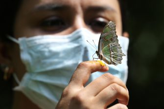 epa08501303 A woman wearing a mask takes a photo with a butterfly at the Cali Zoo, Colombia, 21 June 2020. On 21 June and after being closed for more than three months, the Cali Zoo is the first in Latin America to open its doors to the public again in the midst of the COVID-19 pandemic and under the strictest biosecurity measures.  EPA/Pablo Rodriguez
