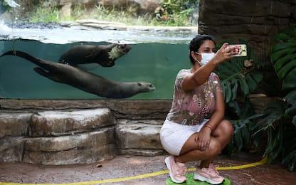 Riapre lo zoo di Cali: il primo in America Latina dopo pandemia. FOTO